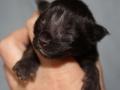 Blackie 2 days