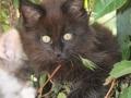 Blackie 3 month