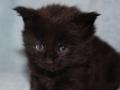 Blackie 1 month