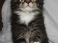 Ludvig 1,5 month