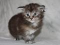 Octavia 3 weeks